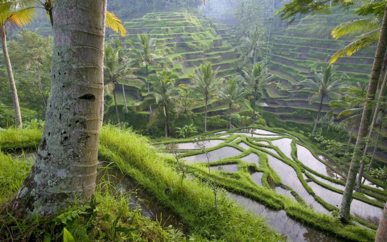 jungle-maze-nature-1